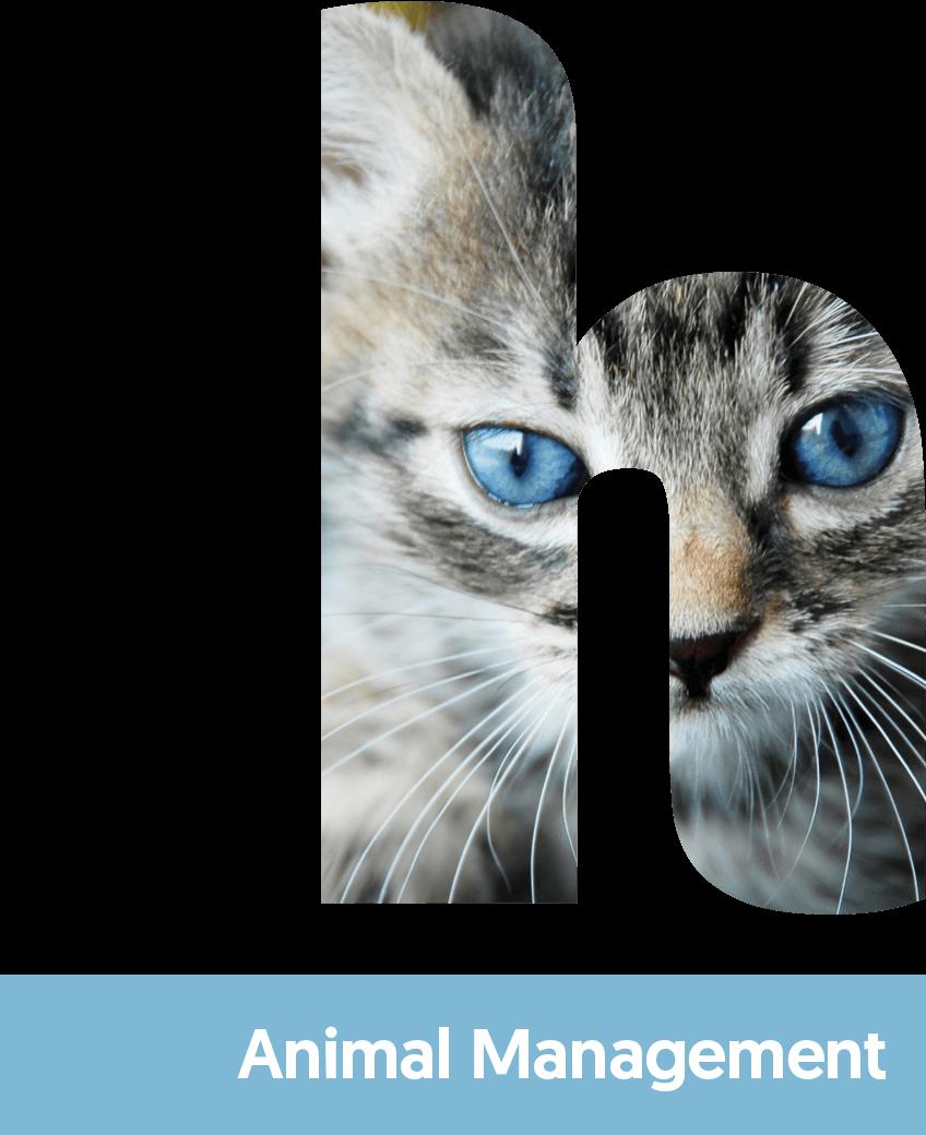 animal-web-header